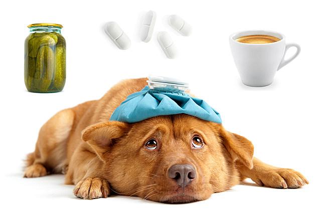 hangover dog