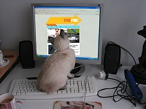 Cat on Computer Reading TheFW