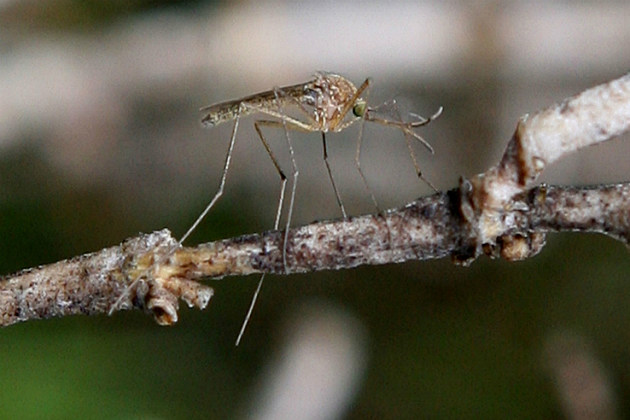 Mosquito Season Could be the Worst in Decades