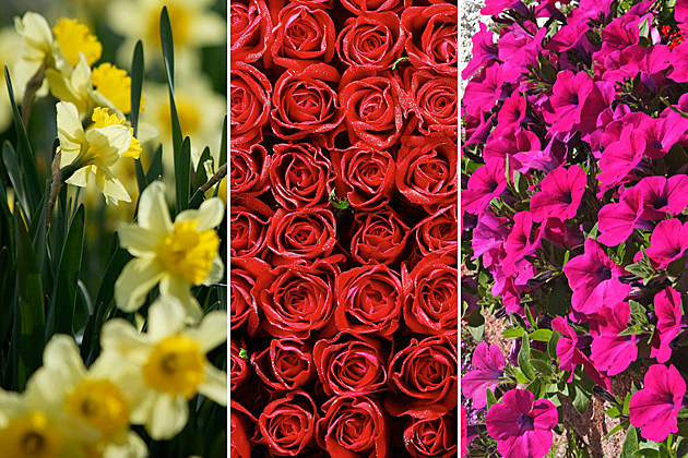 Flowers Help Depression