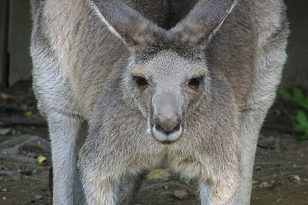 Q Significa Kangaroo Court What's The Real Stor...