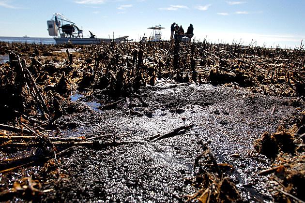 bp-oil-damage