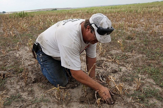 Farmer looking at his field on August 24, 2012 in Logan, Kansas.