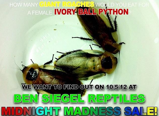 roach contest